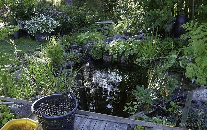 växter runt damm