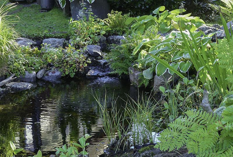 växter till damm